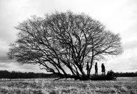 Messenger - tree