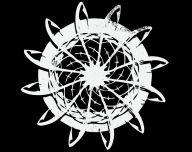 Codex Alimentarius logo 192
